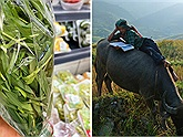 Loại thực phẩm giống cỏ cho trâu bò ăn bán trong siêu thị 14k/100gr ở Hàn Quốc gây tranh cãi cộng đồng mạng Việt
