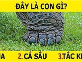 Đố vui: Chỉ nhìn vào chân bạn có thể đoán được đây là con vật gì không?